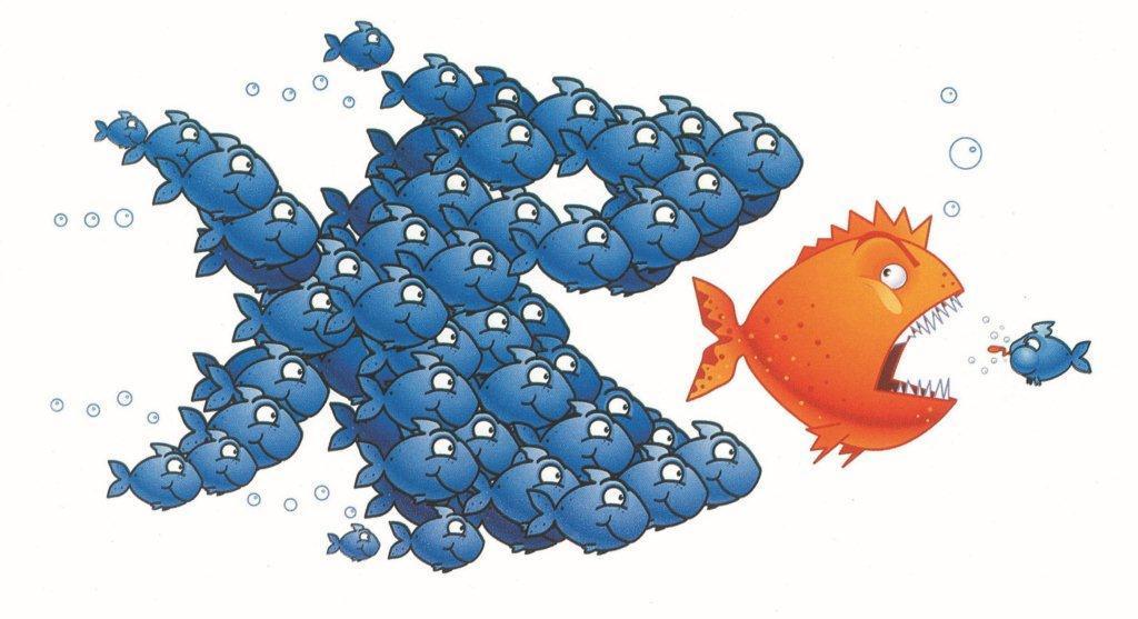 Il pesce grande mangia quello piccolo... o no? L'unione fa la forza!